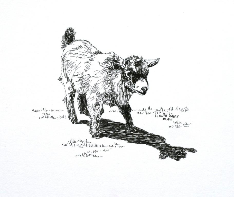Pygmy Goat Portraits With The Nib Pen
