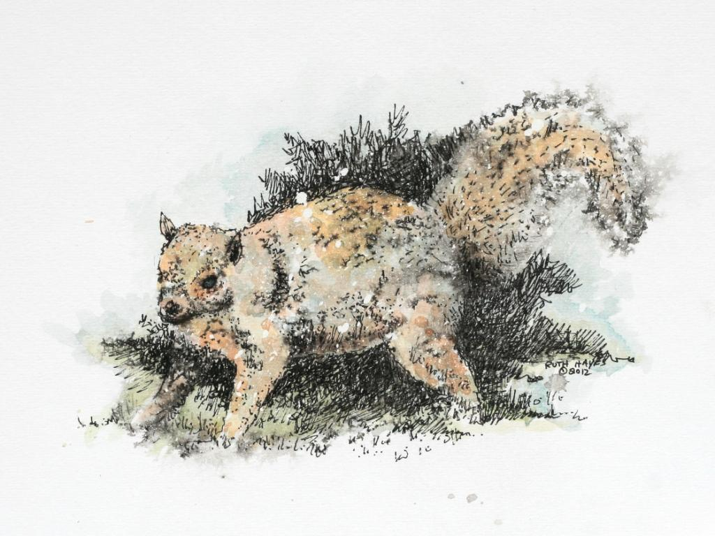 Top Wallpaper Horse Watercolor - squirrel_34571  2018_726725.jpg