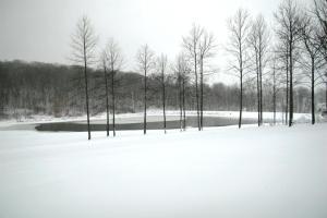 Holiday Snows