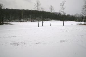 Oh No, More Snow