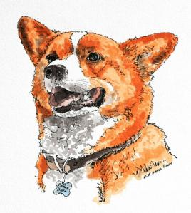 Red and white corgi