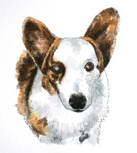Boomer, the cardigan corgi
