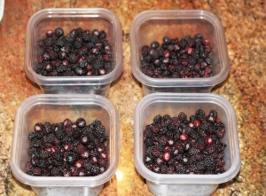 Black raspberries from the field