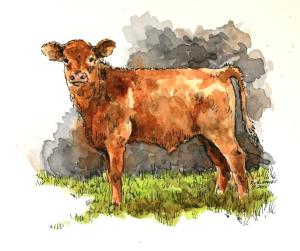 Calf portrait